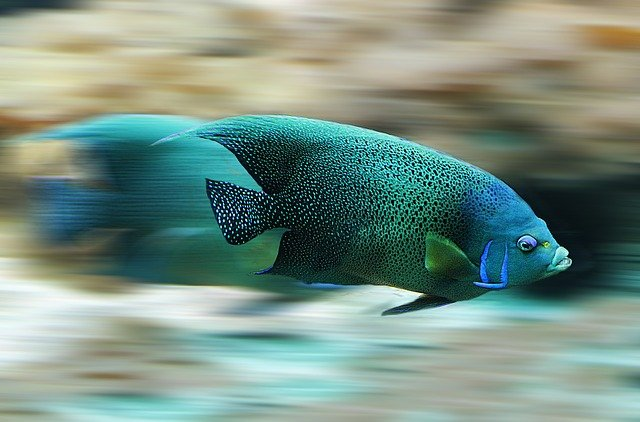 A blurry image of a fish